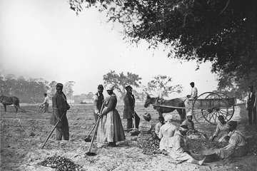 Photo image of slaves hard at work before the Civil War 0501_0301